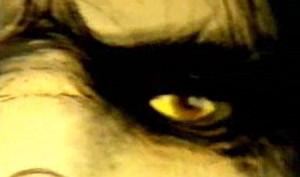 Yellow bigfoot face