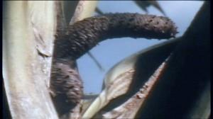 sex tree