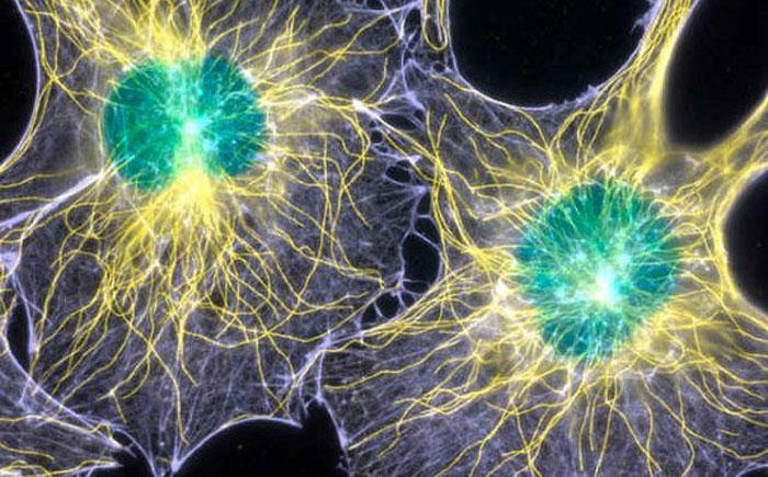 our-brain-might-have-optical-communication-channels